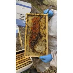 Yellow Gum Local Honey